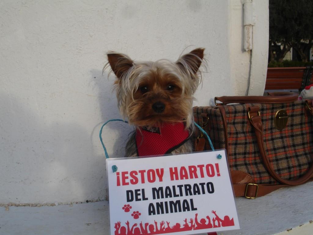 perro-protesta-contra-el-maltrato-animal-1024x768